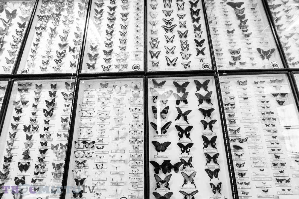 Lviv Zooloji Müzesi Kelebek Türleri Sergisi | Lviv Haber