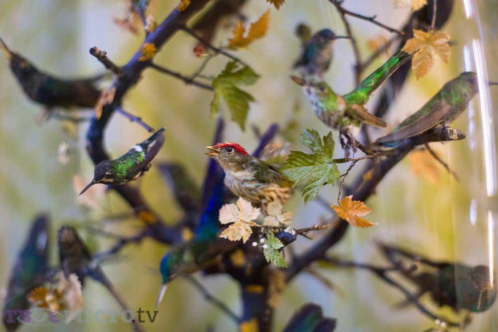 Sinek Kuşu Mini Koleksiyonu | Lviv Haber
