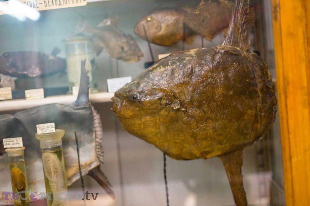 Pivmistsyats Hilal Balığı | Lviv Haber