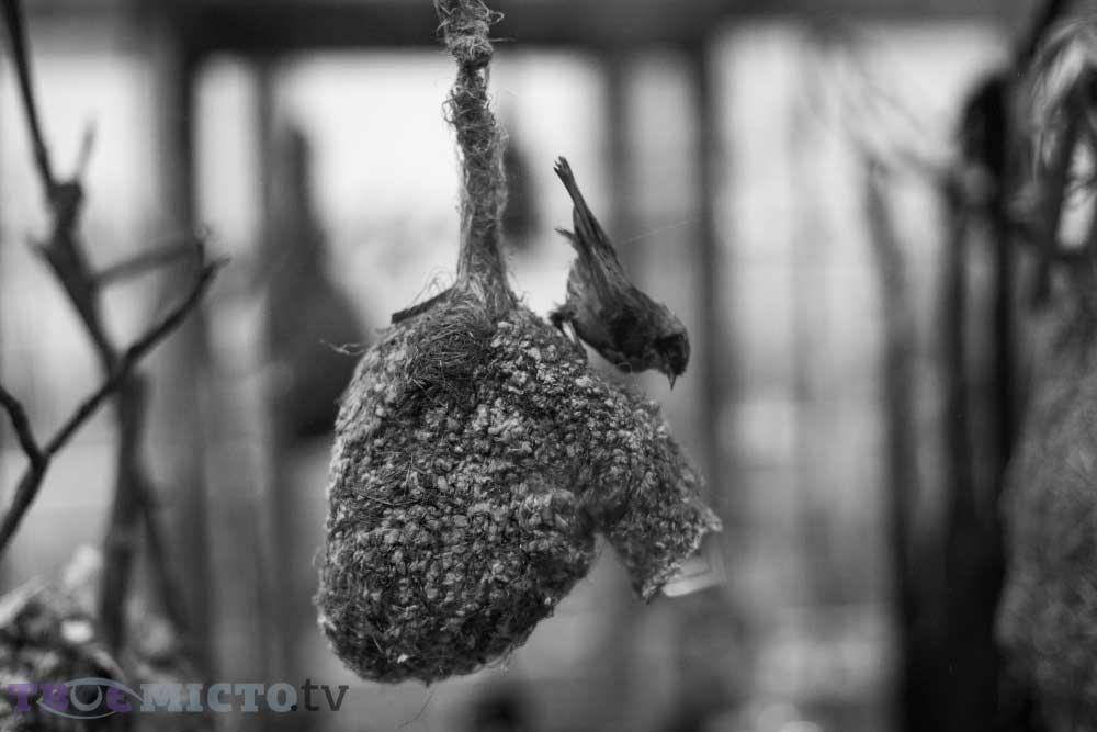 Jack Remez Kuş Yuvası Örneği | Lviv Haber