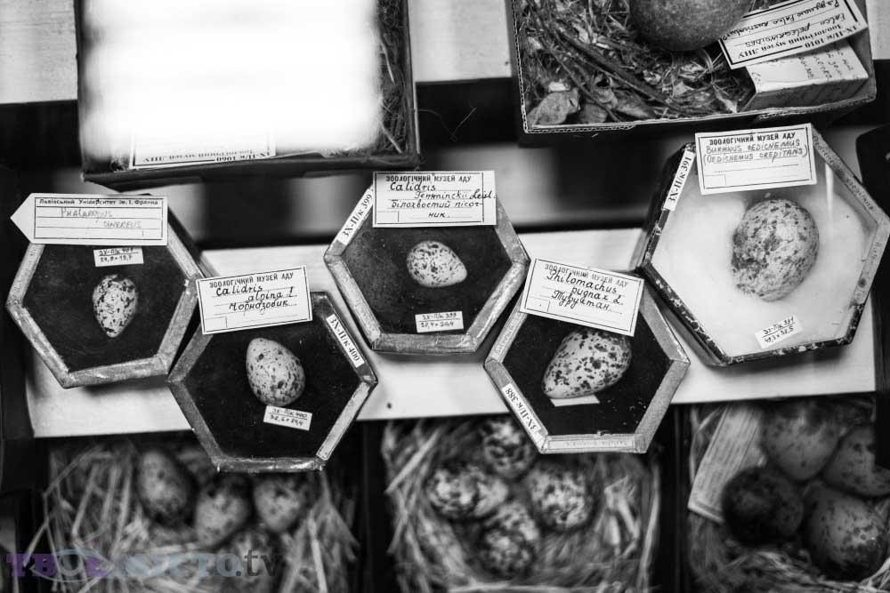 Kuş Familyalarının Yumurtaları | Lviv Haber