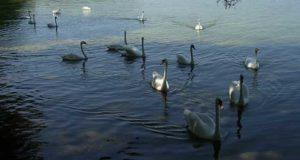 Shatsky Milli Parkı, Ukrayna Kuş Cenneti, Ukrayna milli parkları, Ukrayna Doğal yaşamı koruma alanları, Ukrainian bird paradise, Ukraine